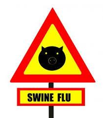 swine flu y