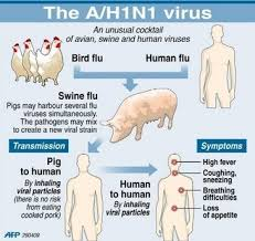 Swine Flu |Swine Flu Symptoms|Swine Flu Causes |Swine Flu Treatment|Swine Flu  prevention|swine flu natural prevention|swine flu|natural medicine|waht is swine flu|how swine flu affect